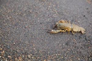 crayfish, shore