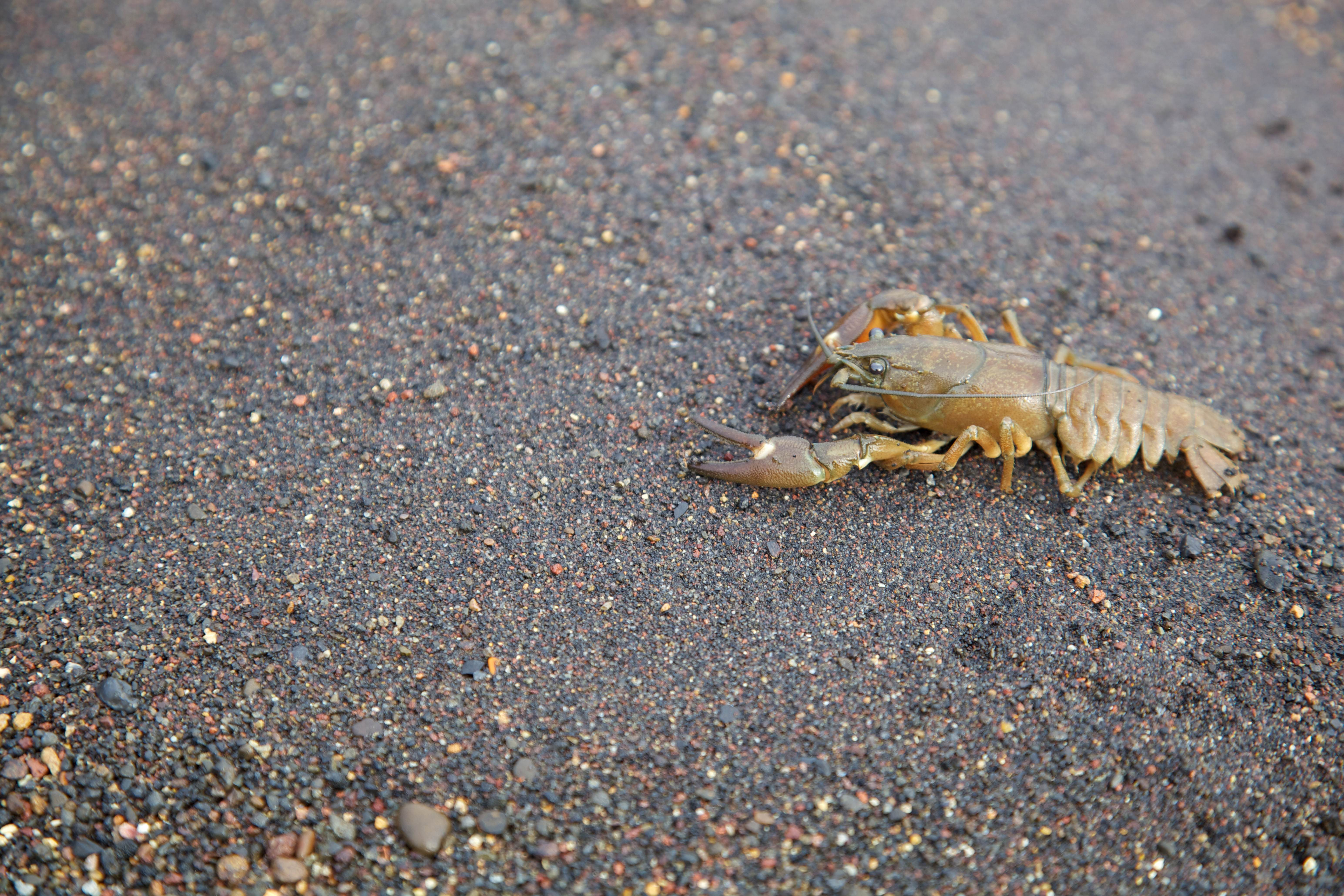 Free photograph; crayfish, shore