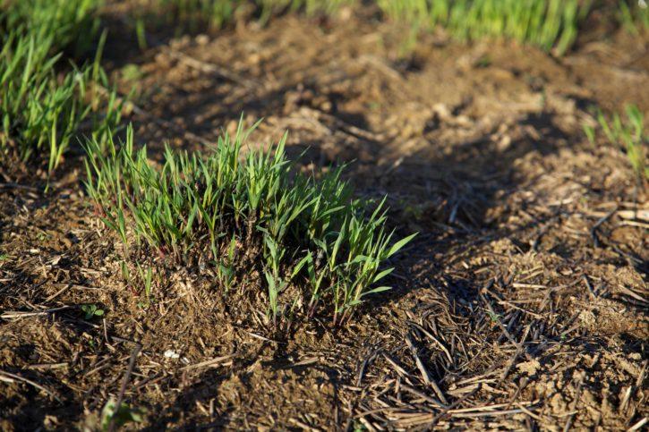 dark, green, grass, grown