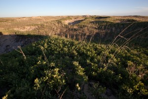 desierto, hábitat