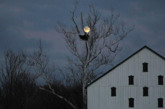 eagles, nest, night