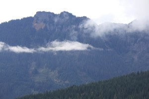jehličnatý strom, Les, kopce, hory