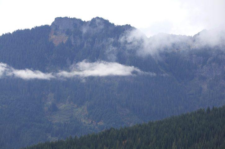evergreen, forest, hills, mountains