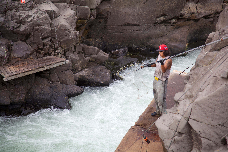 Free photograph; fall, Chinook, salmon, nets, traditional, fishing, Columbia, river, fishery