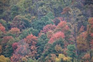 pasti, boja, jesen, stabla