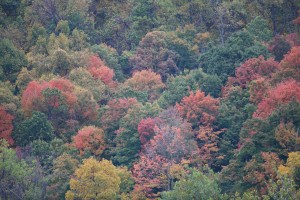 fall, colors, Harpers, Ferry, national park