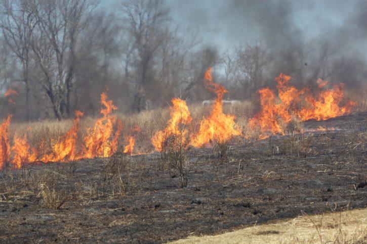fire, burn, field