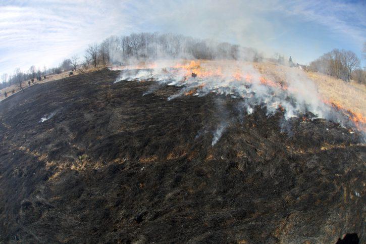 fire, crew, burns, fields, habitat, management