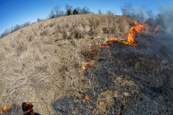 fire, management, fires, flame, hill, nature