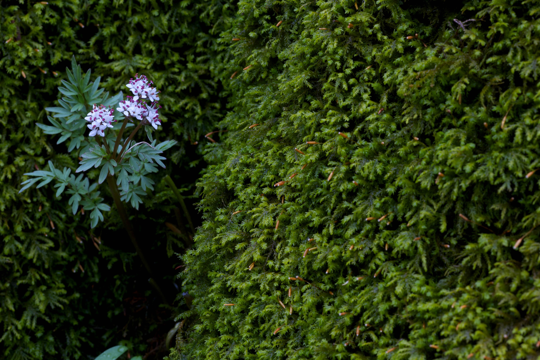 Free photograph; harbinger, spring, native, flower