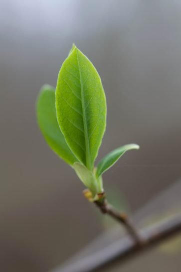 leaves, green, tiny, shrub, bush
