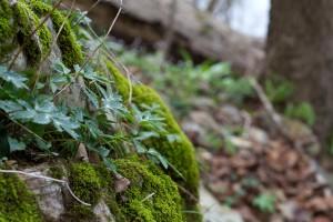 lišajevi, drvo, gljive, drveće, proljeće, šuma, priroda