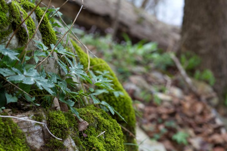 lichens, wood, fungi, trees, spring, forest, nature
