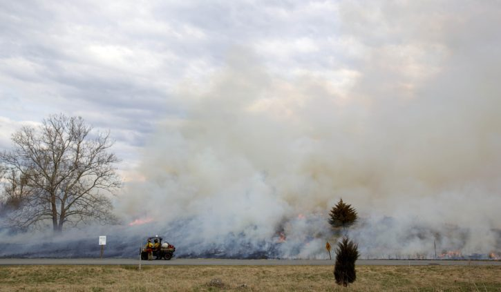pratique, brûler, créer, mieux, la faune, l'habitat