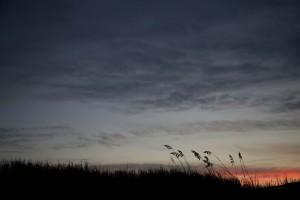 roseau, herbe, silhouette, coucher de soleil