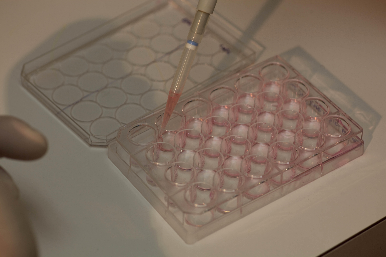 Free photograph; scientist, genetic, testing