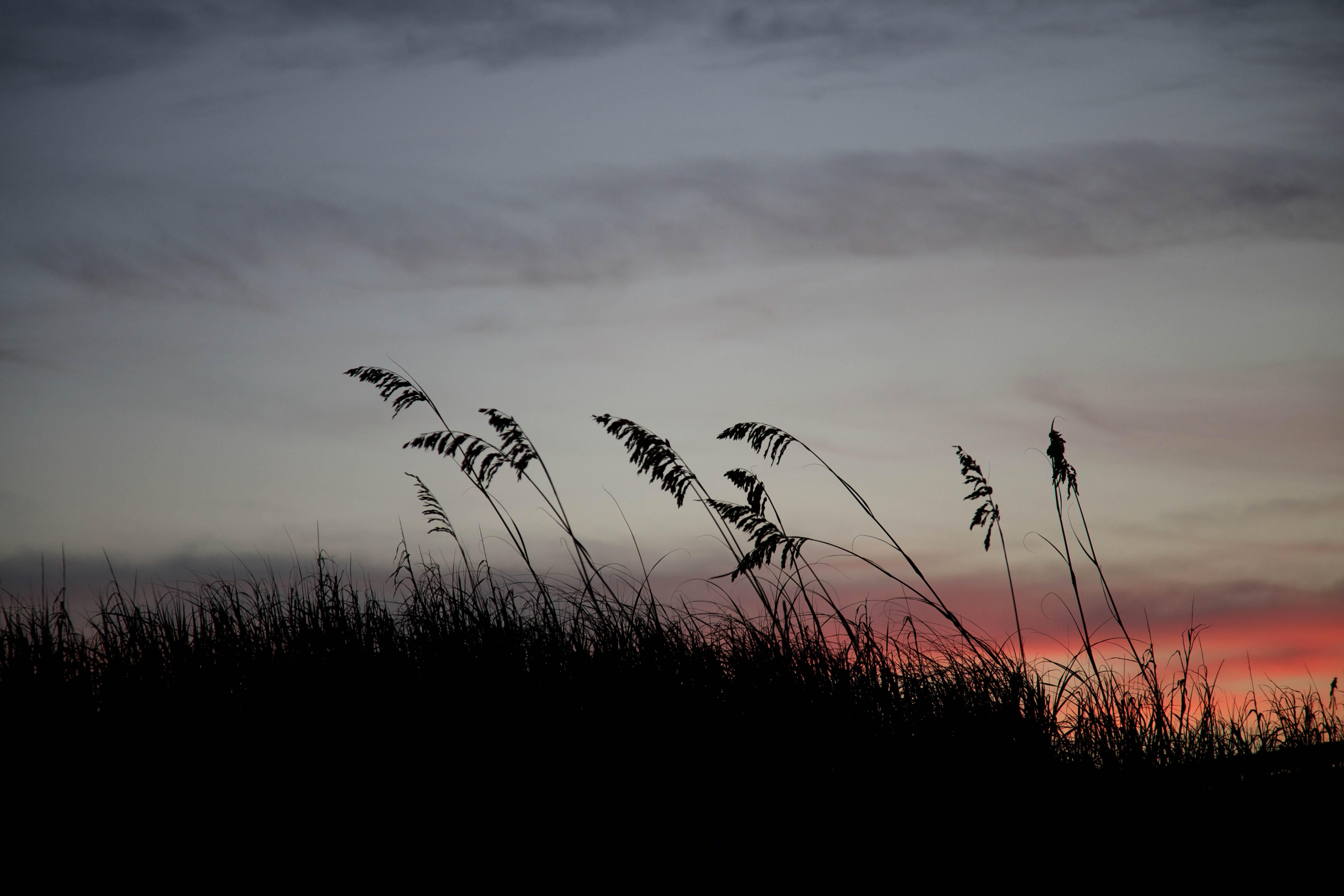 Free photograph; sea, oats, silhouette, beach