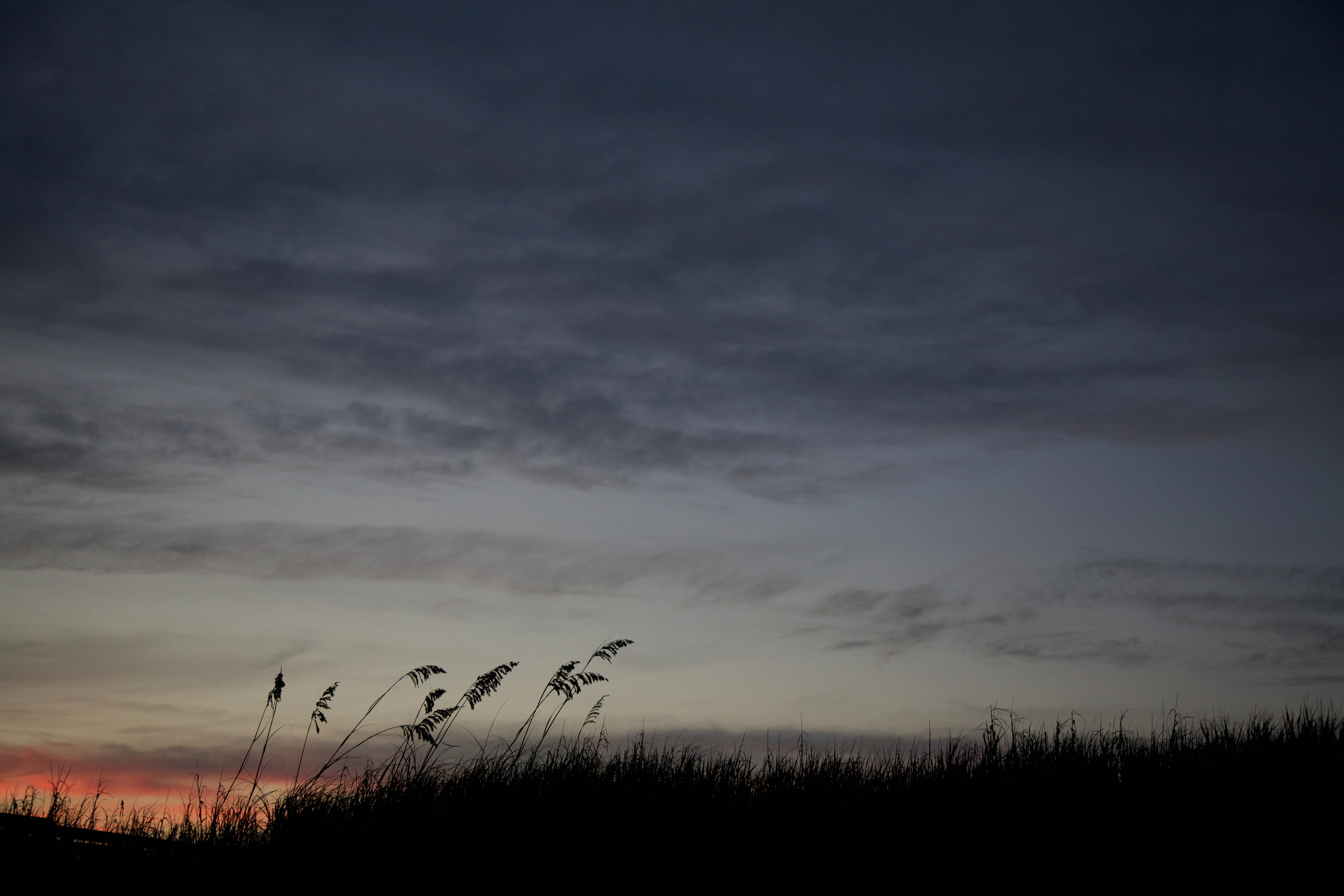 Free photograph; sea, oats, silhouetted, sunset
