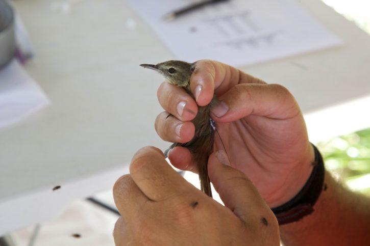 small, bird, hands, human, holding