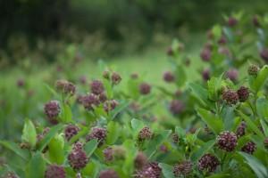 Divljina, cvijet, Divljina, prirode, polja, livade, cvatnje, biljke