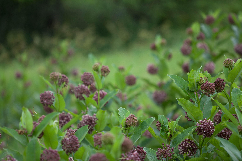 Free photograph; wild, flower, wildness, nature, fields, meadow, flowering, plants