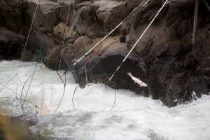 fish, escapes, traditional, dip, nets, stream, river, nature, scenic