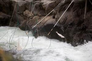 poissons, évasions, traditionnelle, dip, filets, ruisseau, rivière, nature, scénique