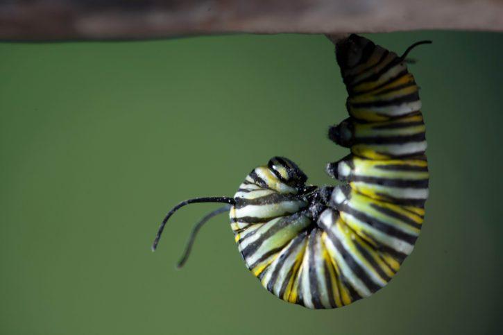insect, larvae, head, close