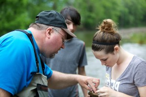 macroinvertebrate, identification