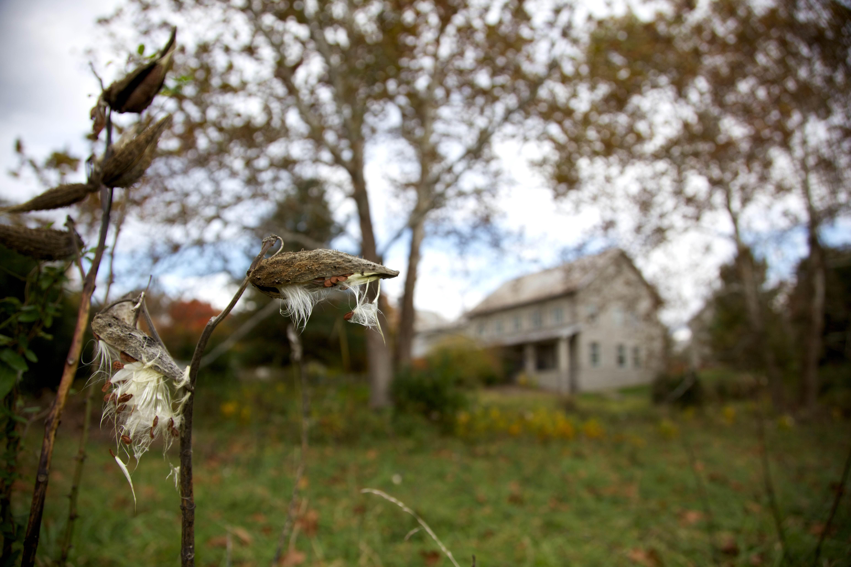 Free photograph; milkweeds, plant, seeding, hill, building
