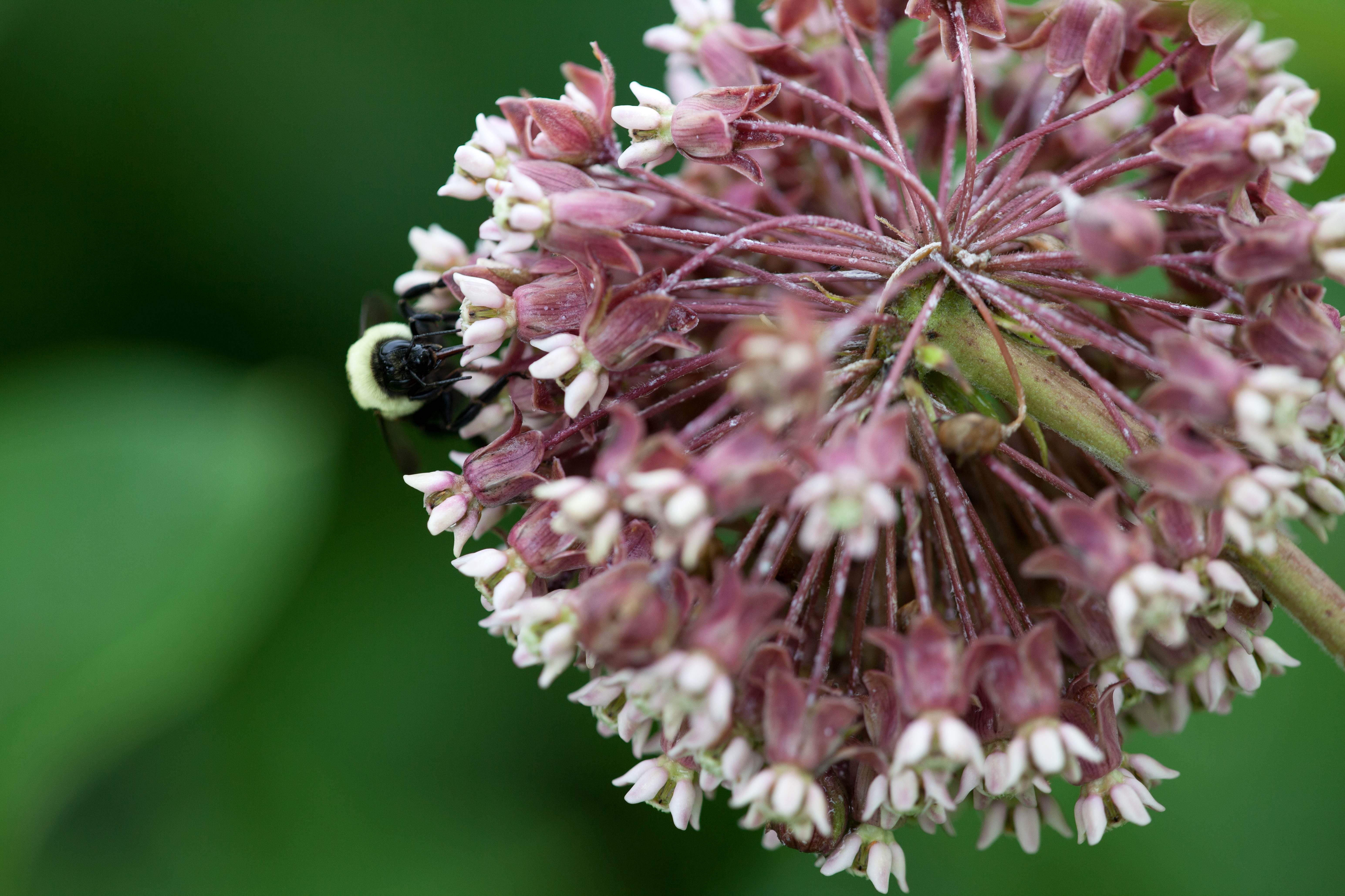 Free photograph; perennial, plant, bug, insect, macro