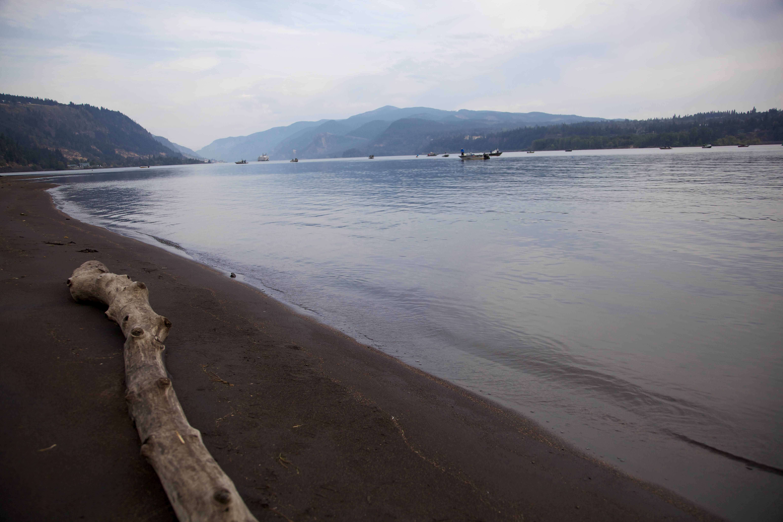 Image libre morceau bois flott rivage for Morceau bois flotte