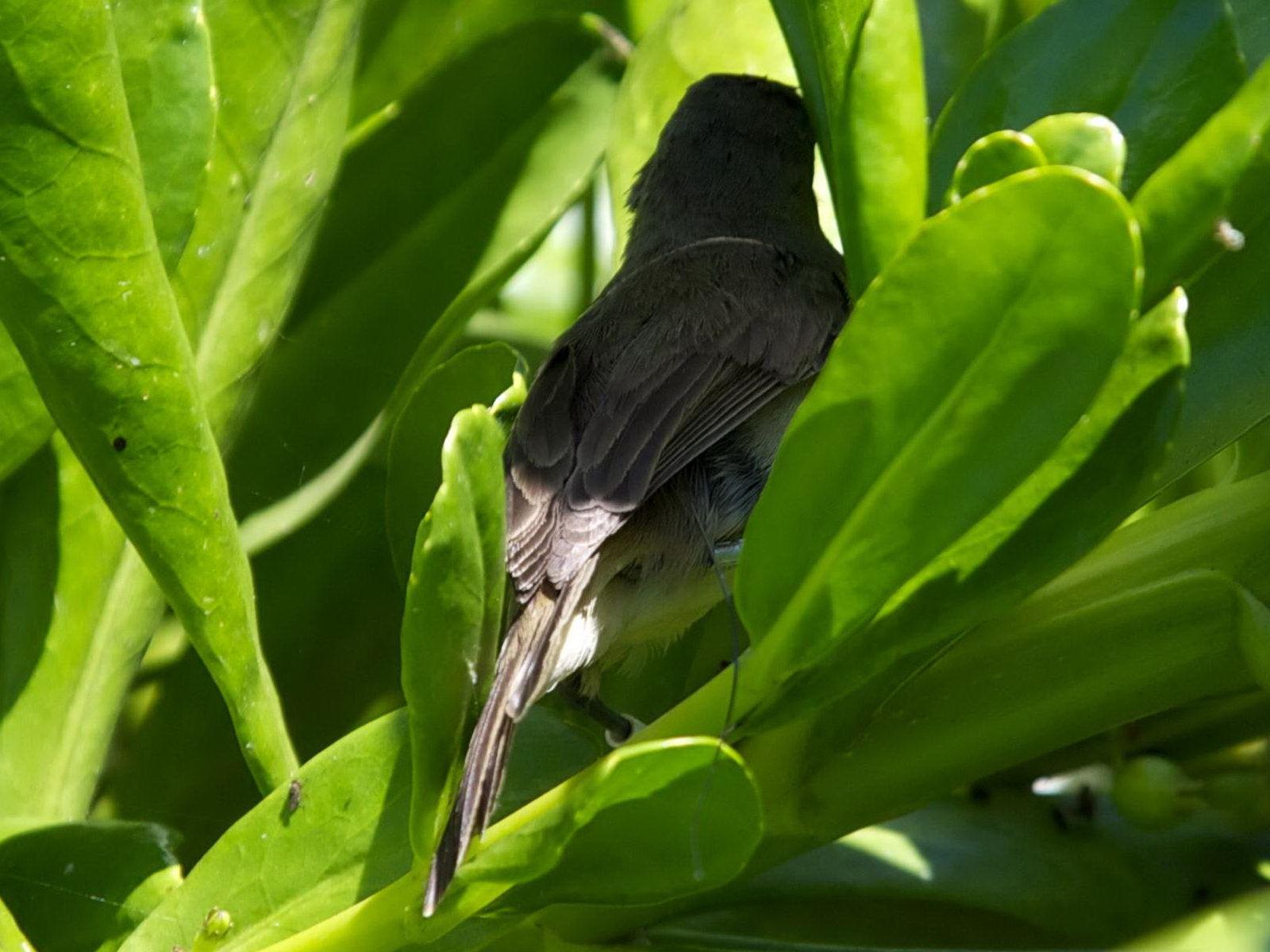Free photograph; small, bird, big, green, leaves
