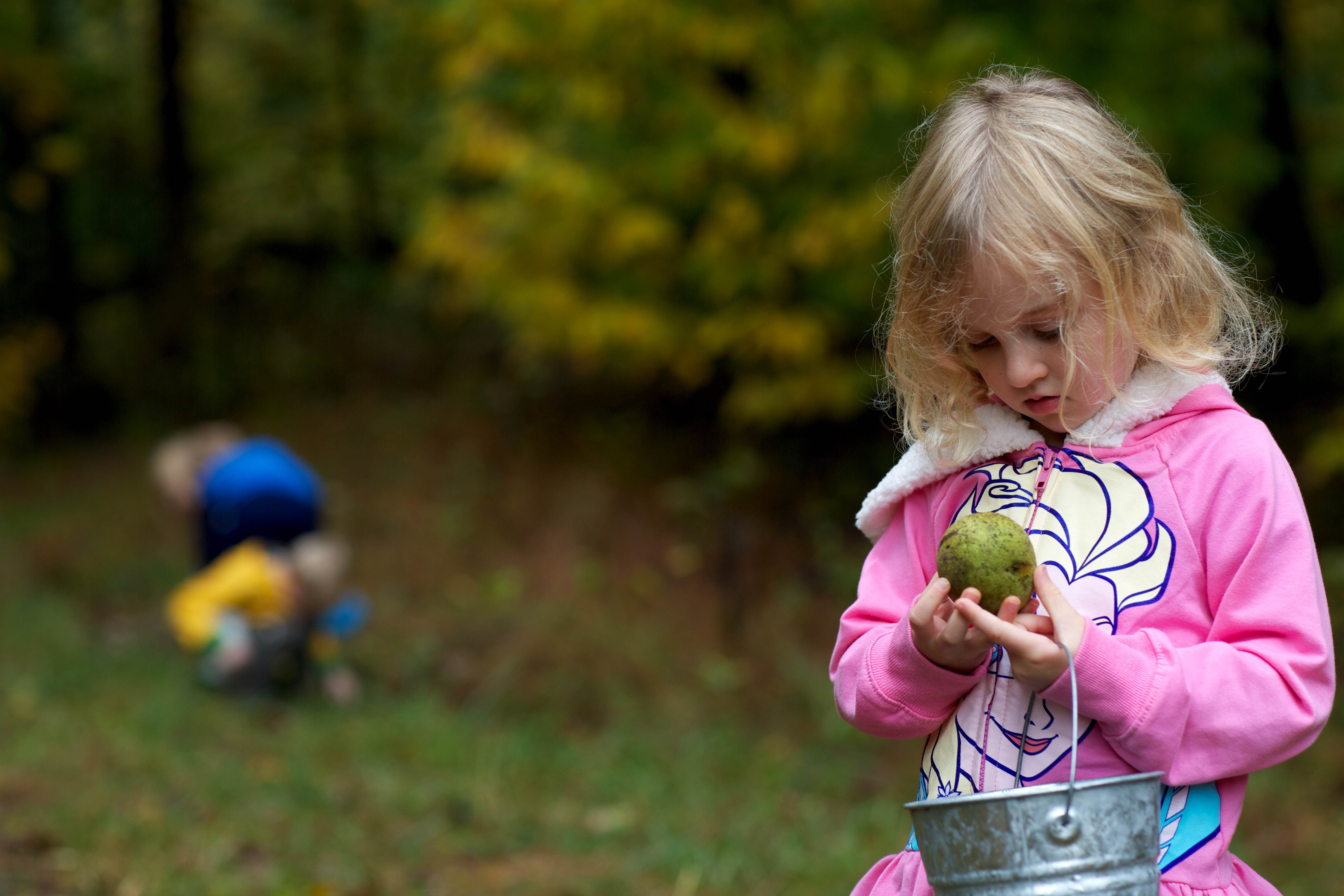 Free photograph; young, girl, examines, walnut, acorn, picking