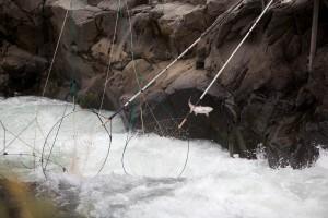 Fisch, springen, entkommt, traditionell, dip, Netze