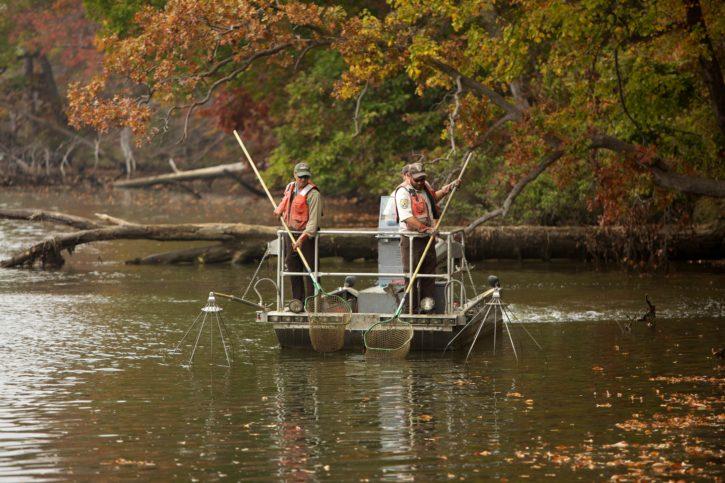 fishing, electrofishing, river, boat