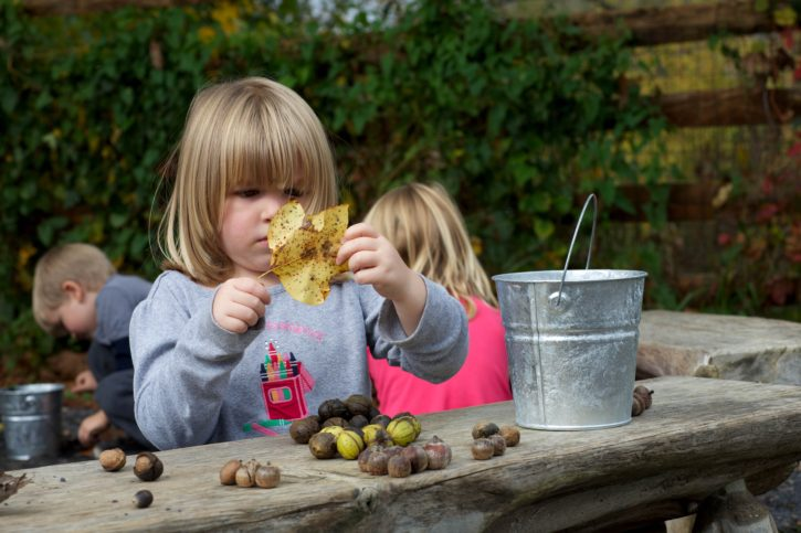girl, gathering, leaves, nuts
