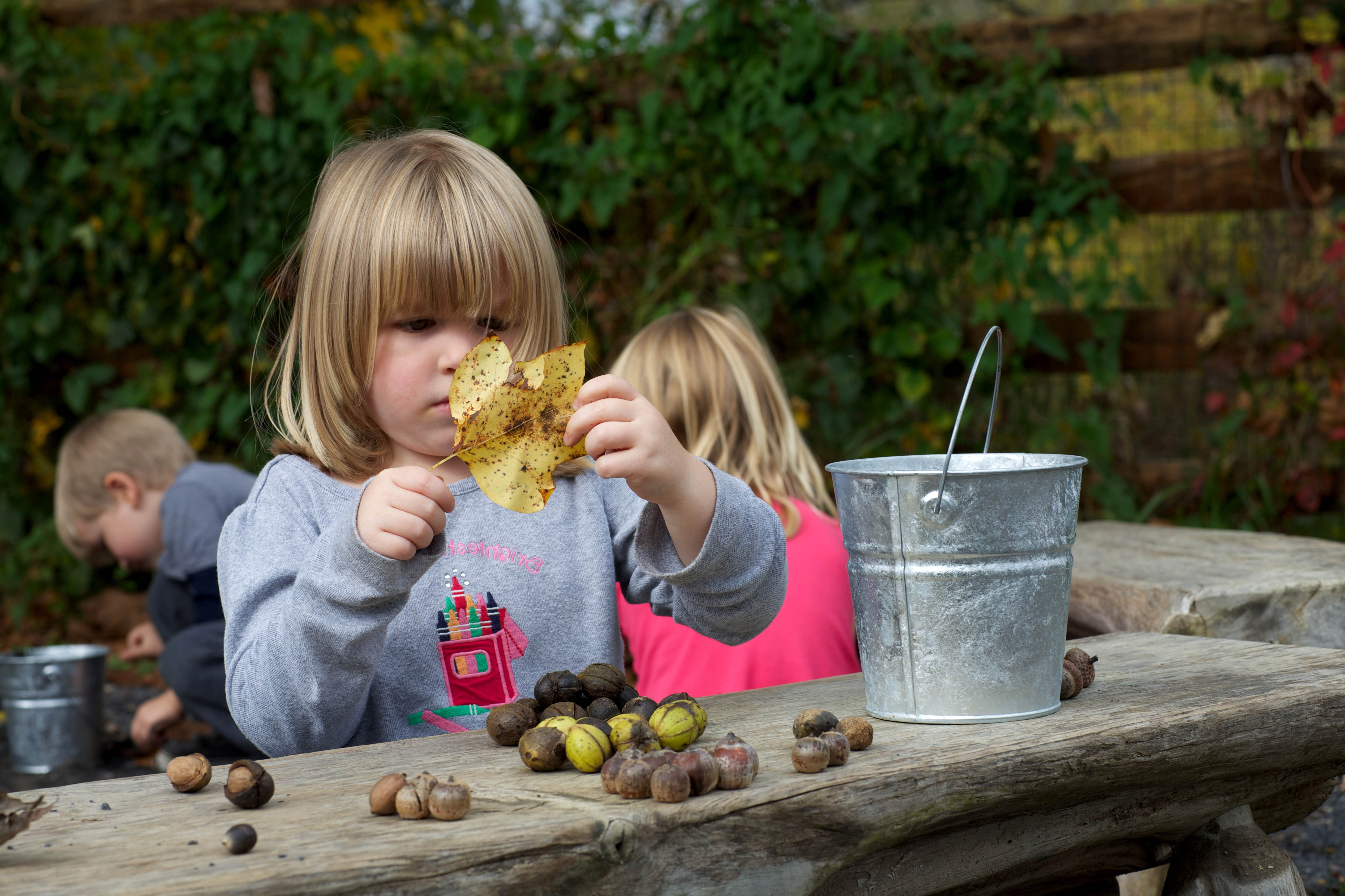 Free photograph; girl, gathering, leaves, nuts