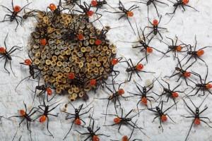 insekti, kukci