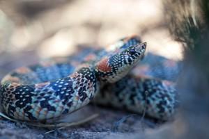 長い、鼻、蛇
