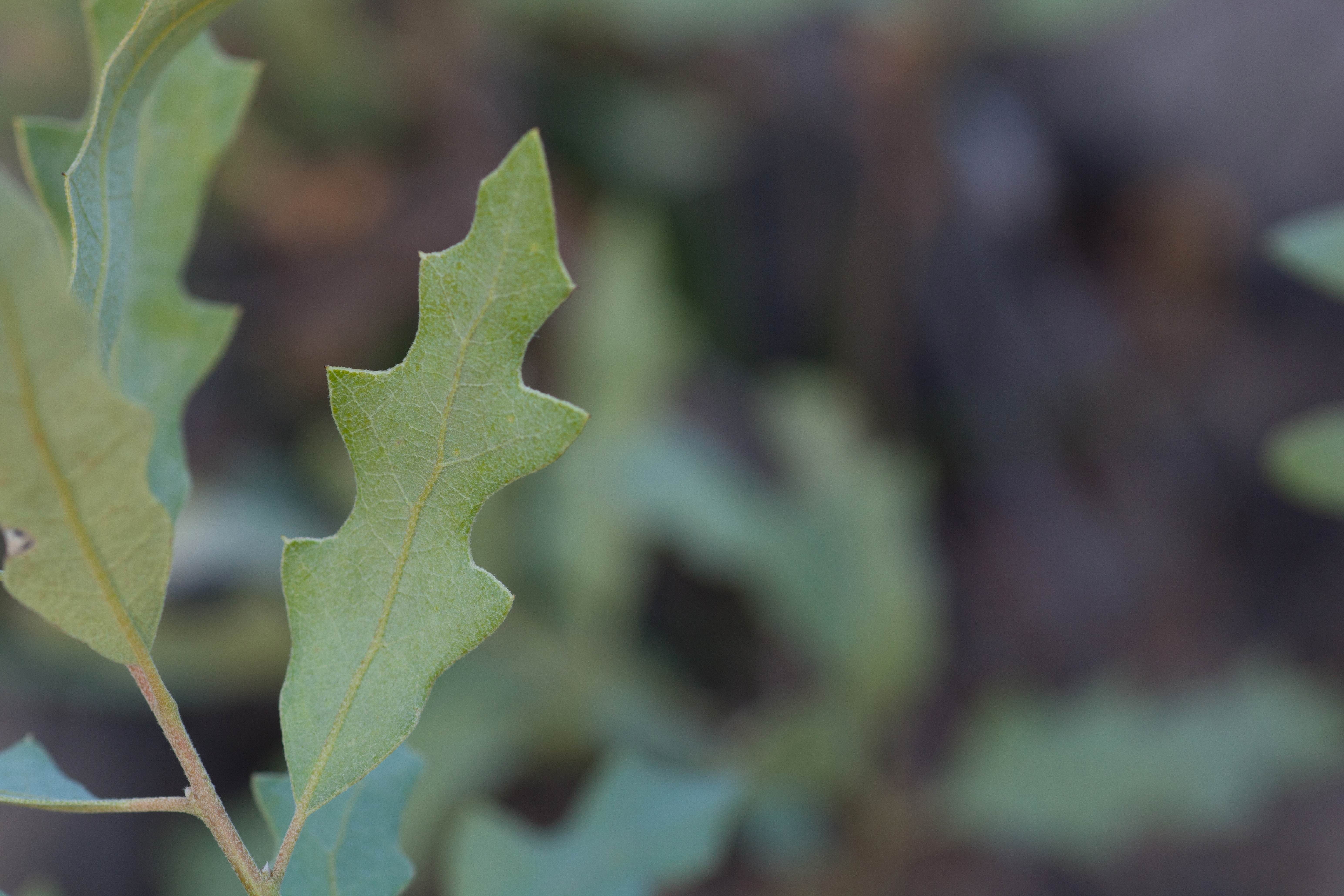 Free photograph; low, growing, thicket, forming, shrub