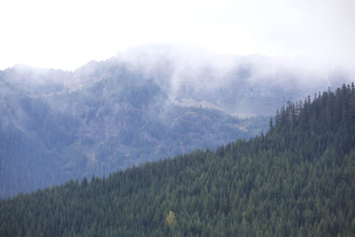 mountain, views, forested, hillsides