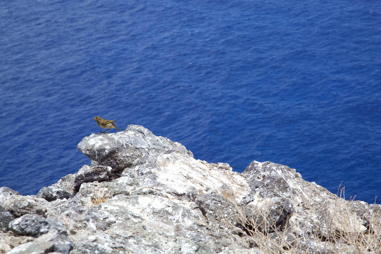 Free photograph; nihoa, Millerbird, shore, rocks