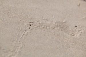sand, desert, tracks, ground