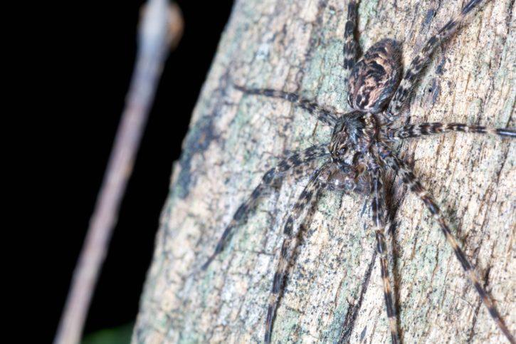 spider, tree, trunk