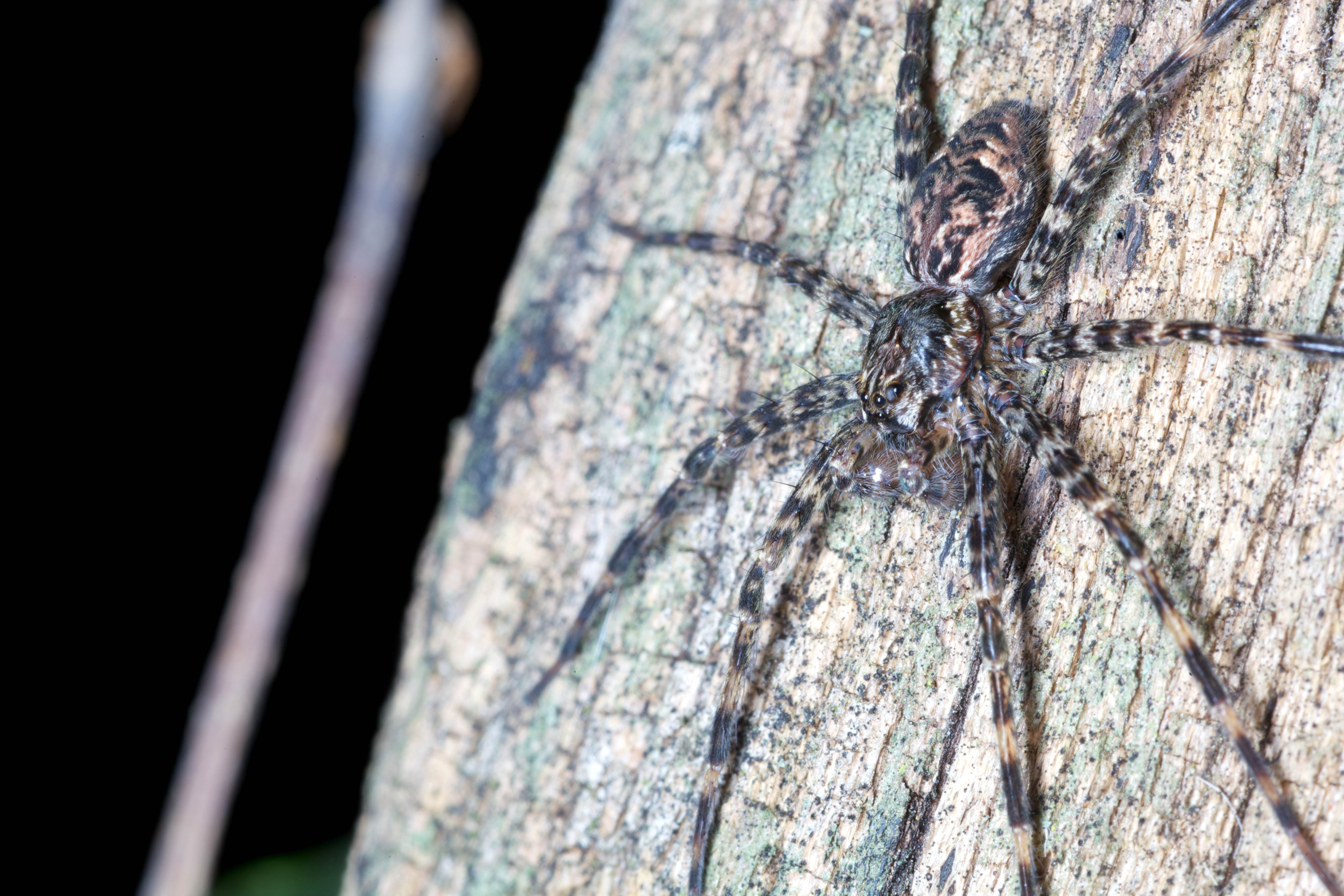 Free photograph; spider, tree, trunk