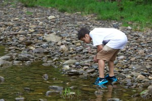 teen, boy, looks, macroinvertebrates, water