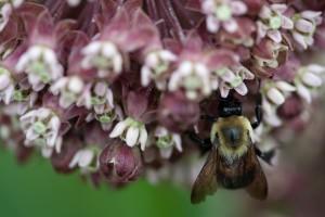 野生蜂、昆虫、花、花の蜜