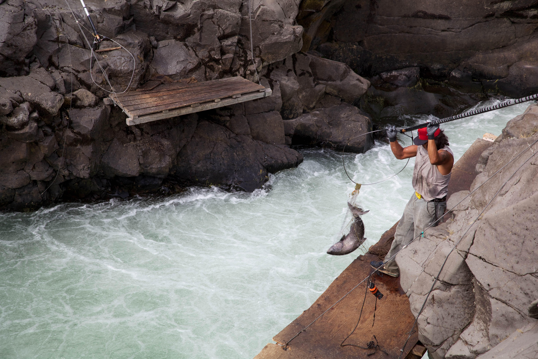 Free photograph; fishing, Yakama, tribal, member, nets, salmon, Klickitat, river