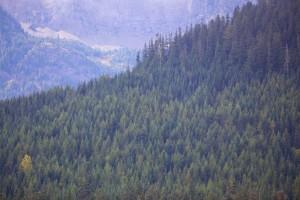 bosque, colina